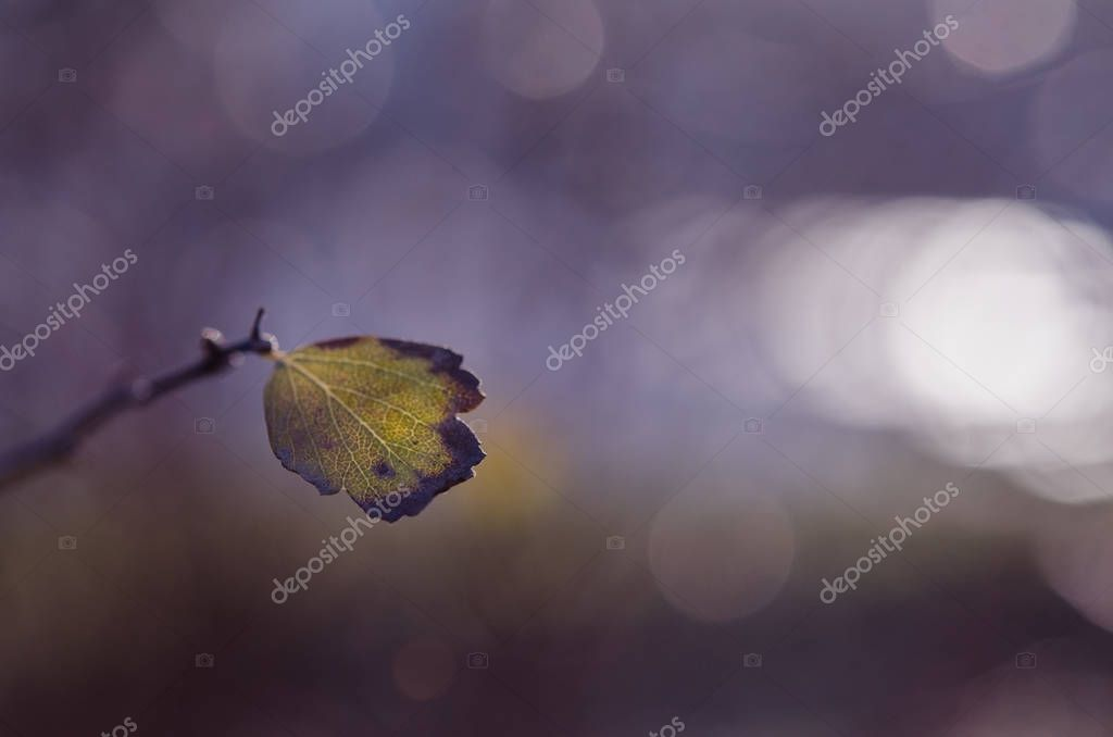 A lonely leaf on a branch. Natural strongly blurred background. Artistic photo with inertial blurring and glowing solar flanks, very soft selective focus.