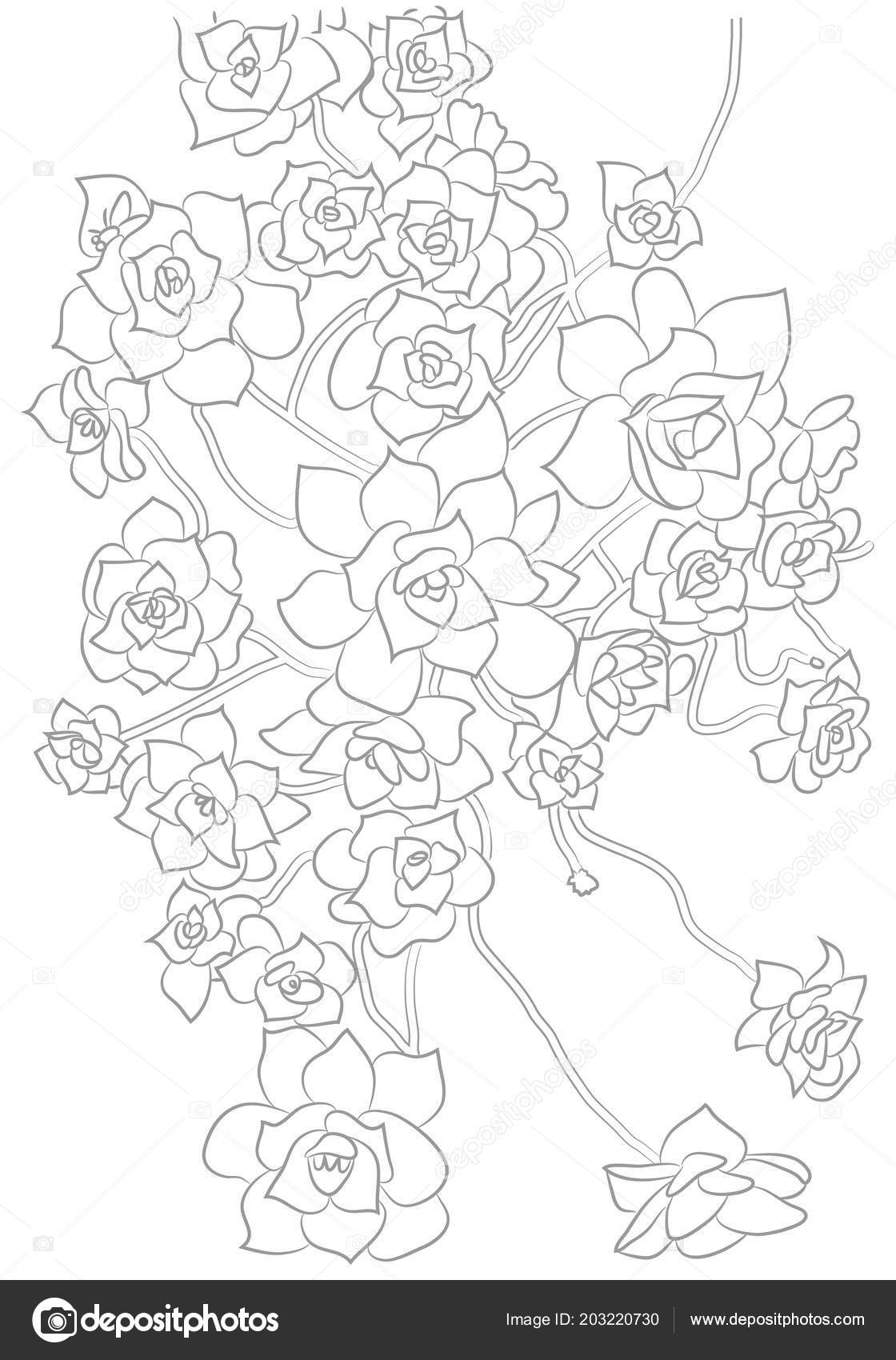 Succulent Outline Drawing Vector Contour Illustration Succulents Outline Drawing Plant Coloring Book Botanical Stock Vector C Diana Vasileva 203220730