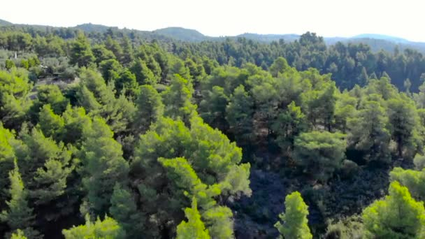 Aerial drone shot over forest with road. Shot in 4K (UHD)