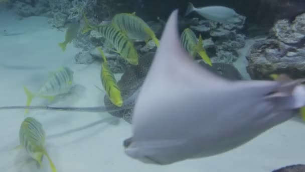 The underwater world of marine life 45 / In the Oceanarium various exotic inhabitants of the seas swim behind the glass