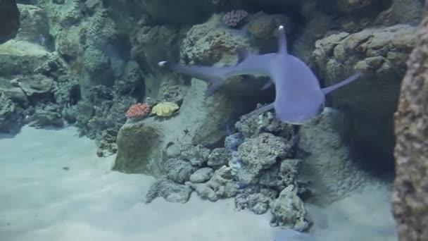 A víz alatti világ a tengeri élővilágot, 60, / a Oceanarium a különböző egzotikus lakói a tengeren úszni az üveg mögött