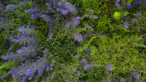 Long purple wildflowers grow in the field removed from the quadcopter