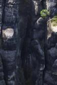 Strom, který roste ve skalní stěně Schrammstein ridge, Labské pískovce, Sasko, Německo, Evropa