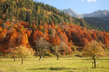 scenic view of Autumn forest, Eng, Karwendel Mountains, Tyrol, Austria, Europe