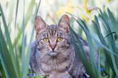 Niedliche graue Hauskatze im langen Gras