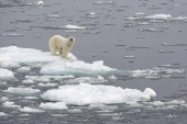 festői kilátás a jegesmedve jégen, Norvégia, Európa