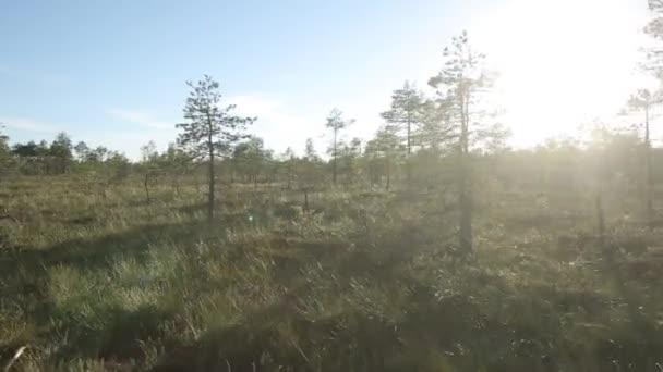 Stromy v bažině letu na stedicam za slunečného dne