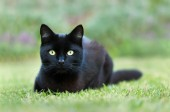 Photo Close up of a black cat lying on grass in the garden