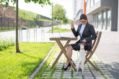 Business woman works on a laptop plays with a puppy of Jack Russell Terrier in a summer cafe. A small dog stands on its hind paws and begs for ice cream from the owner on the street