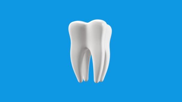 Molární zub. 4K animace jasně bílého molárního zubu na světle modrém pozadí