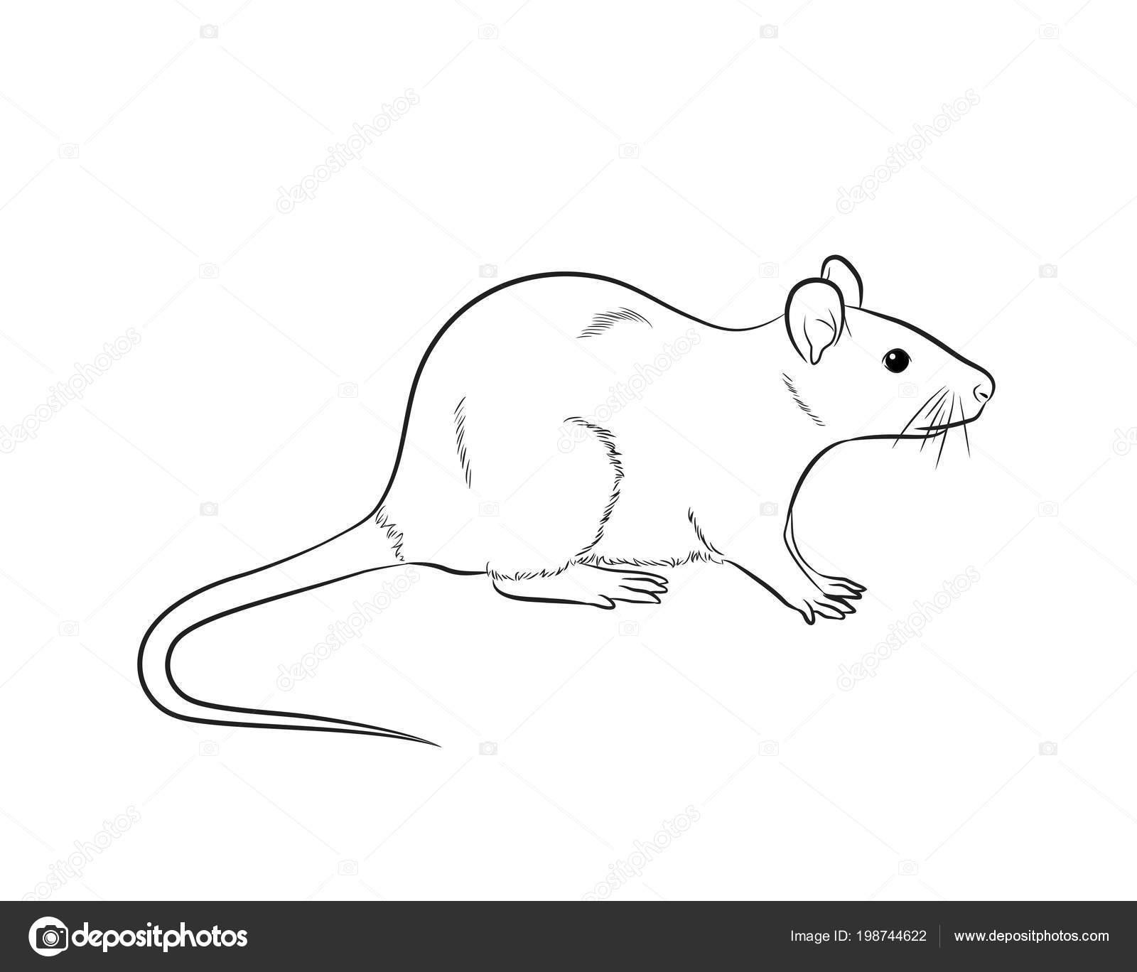 imágenes ratón dibujo vector de dibujo de ratón de dibujos