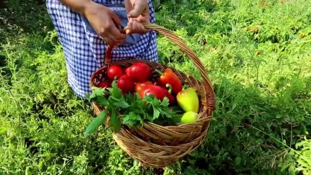Žena držící koš plný zeleniny