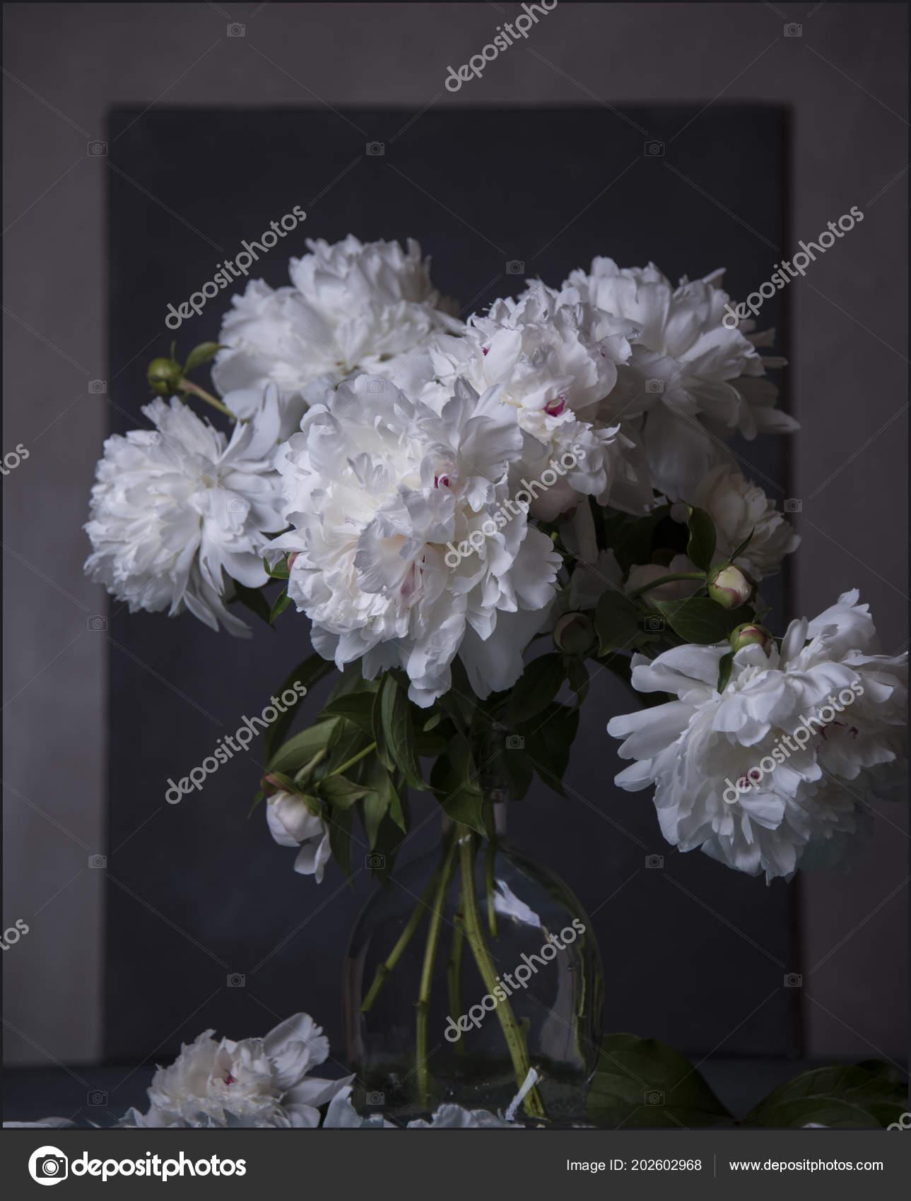 Big White Flowers Blue Background Stock Photo Airimic 202602968