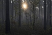 Mlžného lesa s paprsky a mlha
