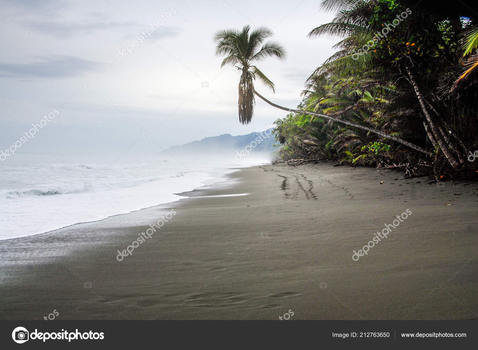 Solitary Palm Tree Leans Black Sand Beach Entrance Corcovado