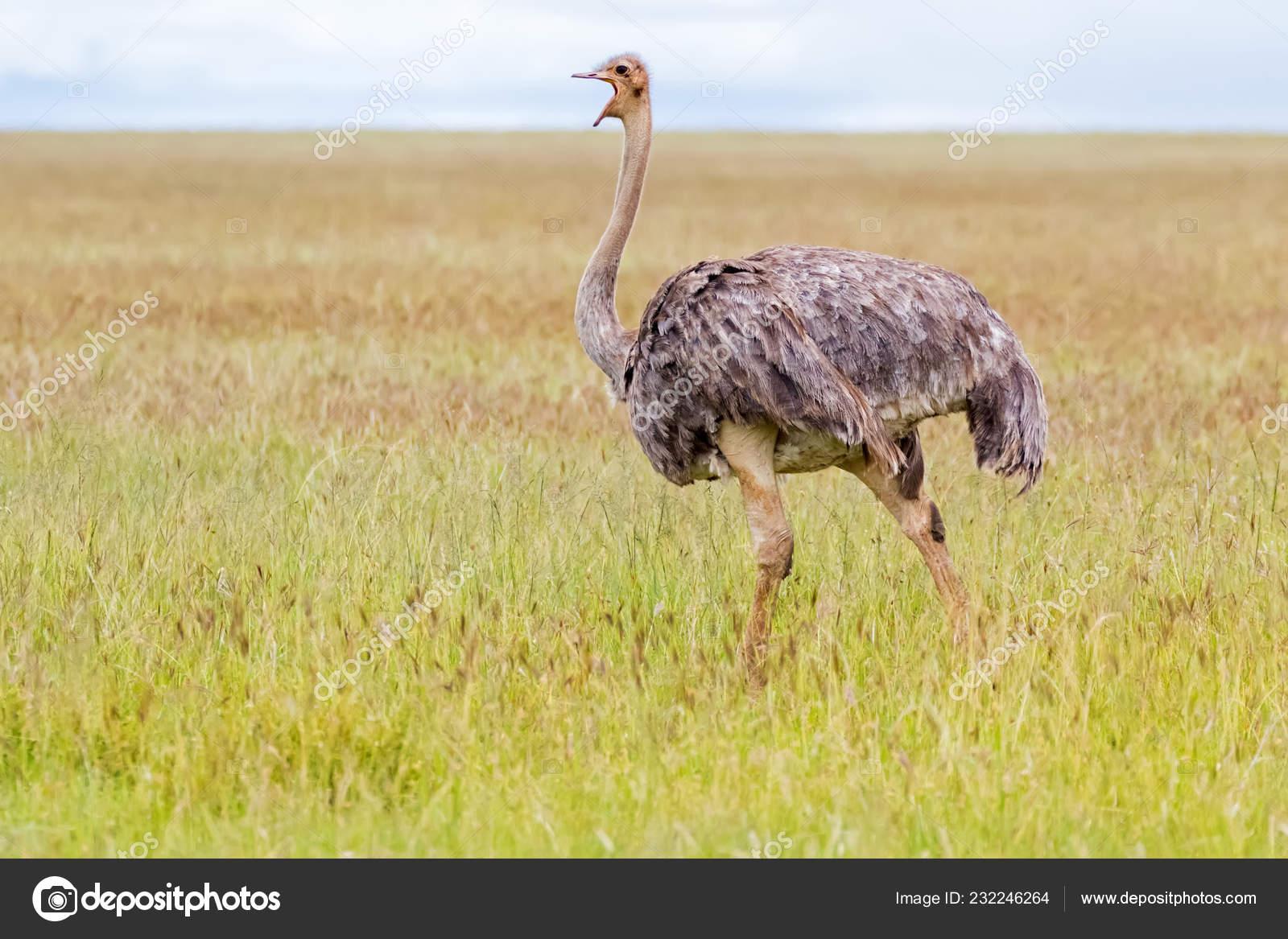 Nohy dlouhé ptáky