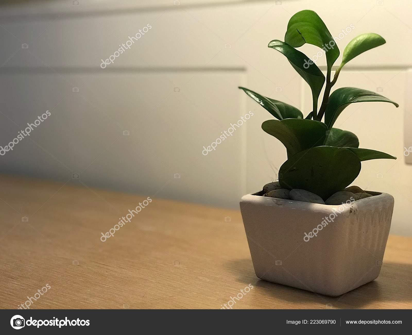 Pot Plante En Bois gros coup sur pot plante verte décoré sur table bois