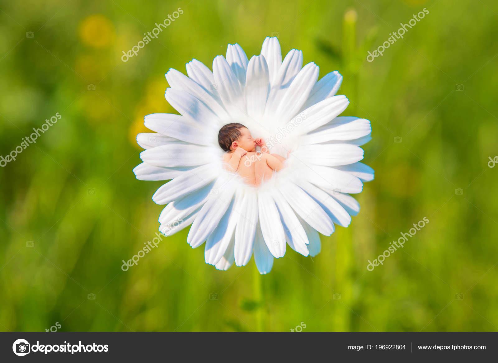 Newborn Baby Sleeps White Daisy Flower Newborn Baby Sleeps Meadow