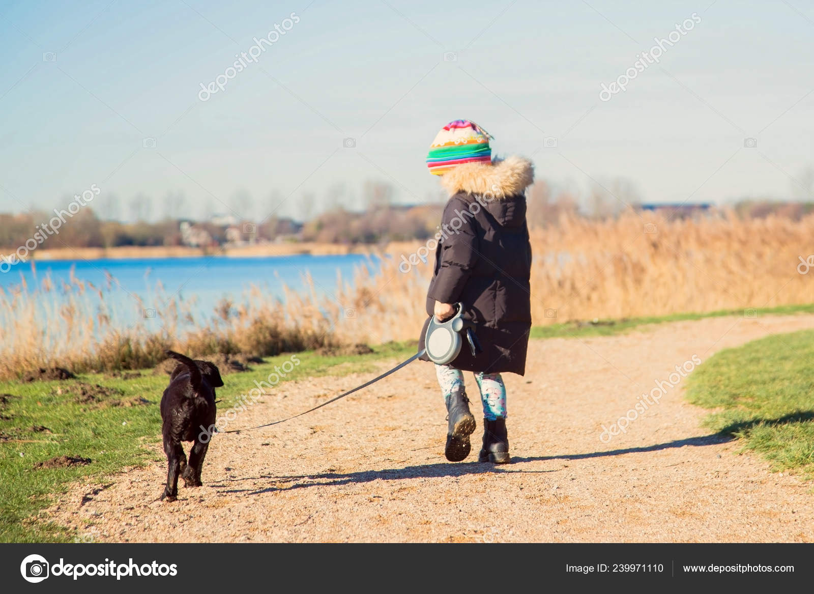 10723eb87f758 Small child is walking a Labrador Retriever puppy. Kid and Labrador  Retriever dog for a walk. Best friends ever. Happy child and puppy  together. Pets care ...