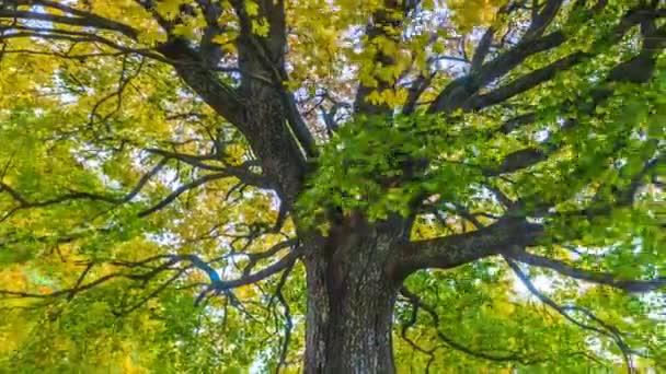4k Az őszi táj időrendje tölgyfával. Színes lombozat az őszi parkban.