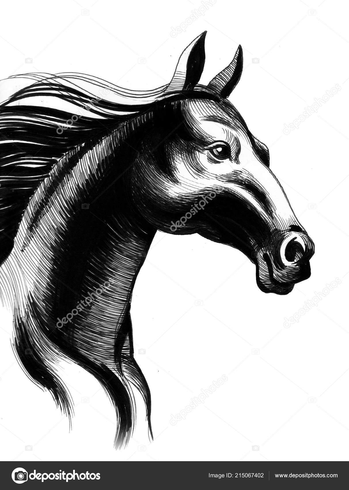 Black Horse Head White Background Ink Illustration Stock Photo C Alexblacksea 215067402