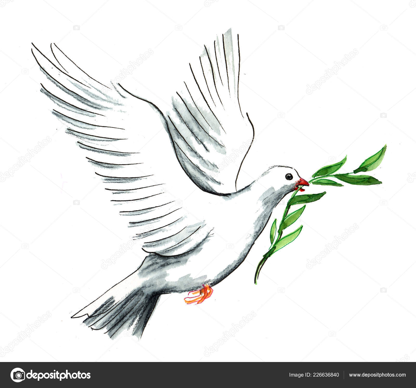 Flying White Dove Olive Branch Its Beak Ink Watercolor Illustration Stock Photo Image By C Alexblacksea 226636840