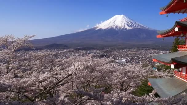 Panning zastřelil Mt. Fuji s Chureito Pagoda na jaře, Fujijošida, Japonsko