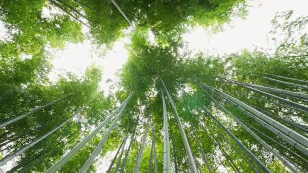 Bambusový les, Arashiyama, Kjóto, Japonsko