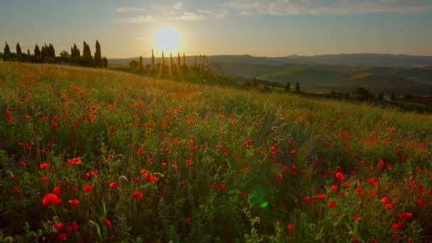 Toszkána táj vörös mákokkal napkeltekor, Pienza, Olaszország