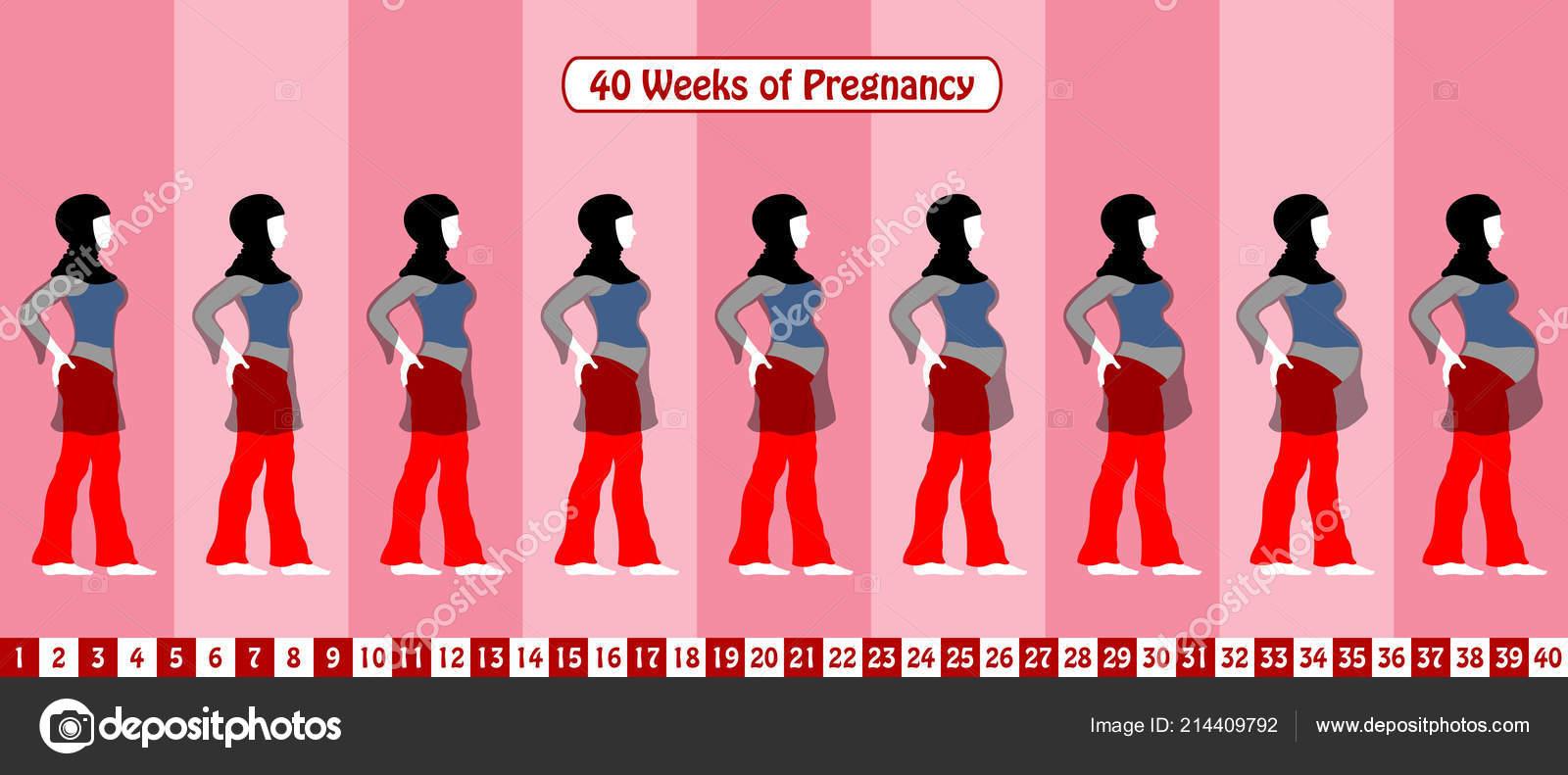 cdce404ea 40 semanas de embarazo con una mujer musulmana embarazada lleva velo  religioso y vestido transparente. Todas las etapas del cuerpo y objetos en  diferentes ...