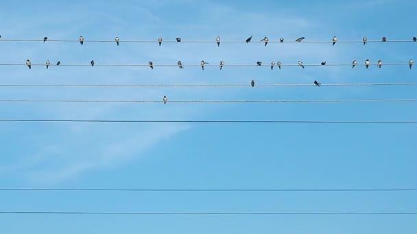 Nyáj madarak elektromos vezetékek rögzített, míg a prinking. Fekete-fehér madarak, kék ég, a háttérben fény felhők borított.