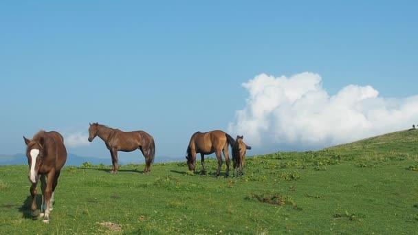 Stádo koní na pastvinách. Velmi dlouhý záběr. Karpaty horské pastviny v létě. Koně pasoucí se a chodit na zeleném kopci. Modrá obloha pokryta bílými cumulus. Rozmazané pozadí