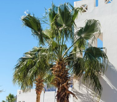 green branches of palm trees against the white wall of a house i