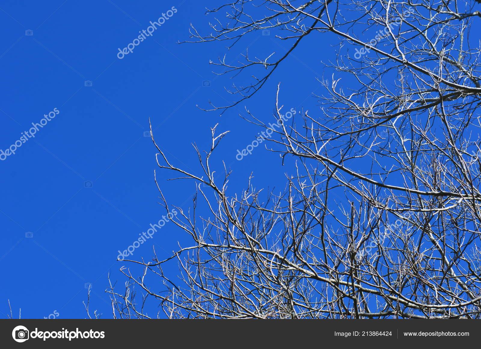 Μαύρο πουλί στο μουνί φωτογραφίες