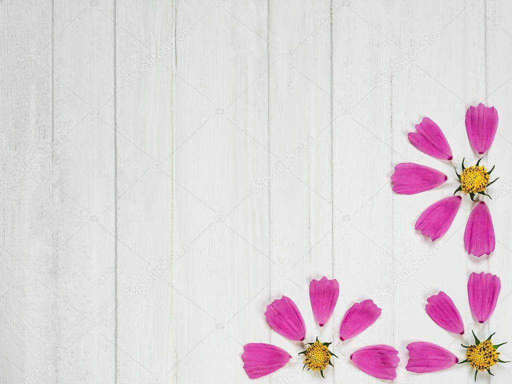 Pink petals of a beautiful flower