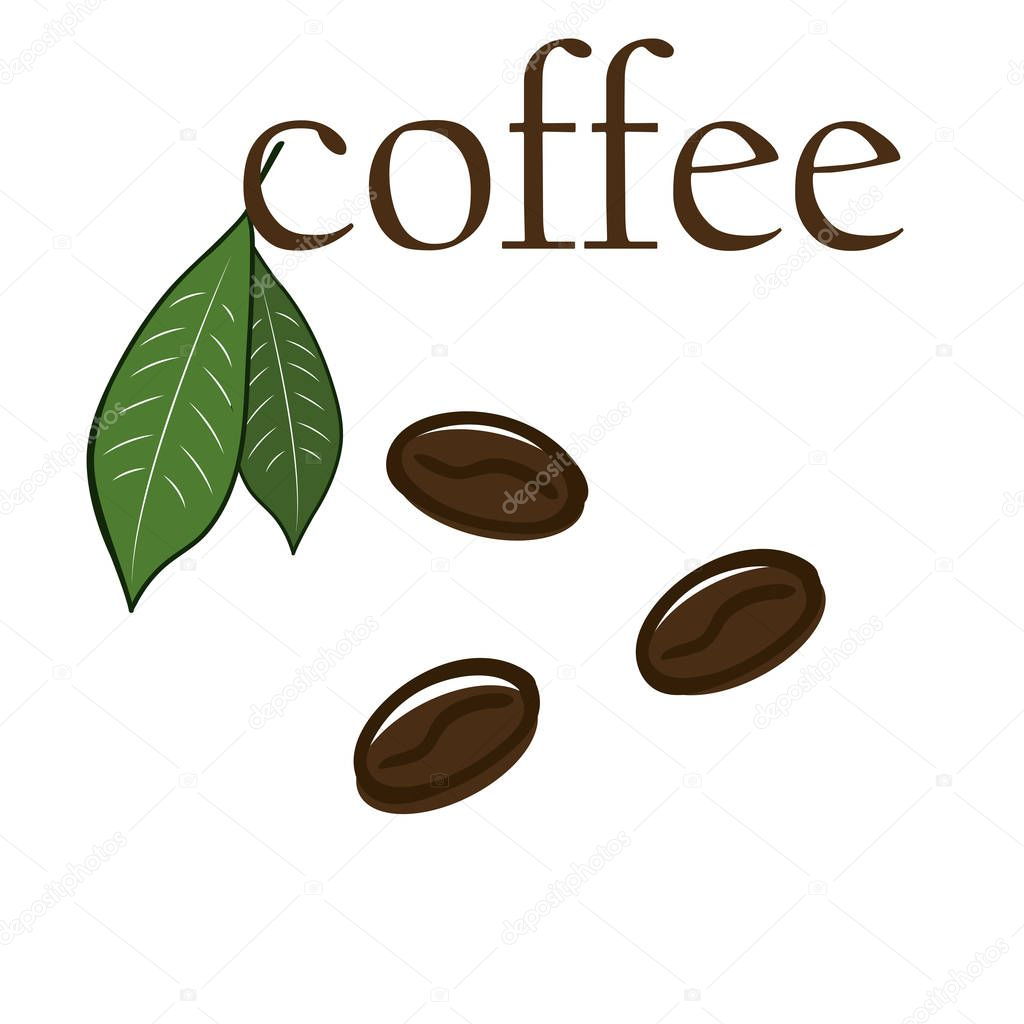 Coffee beans with leaves vectror illustration on white background