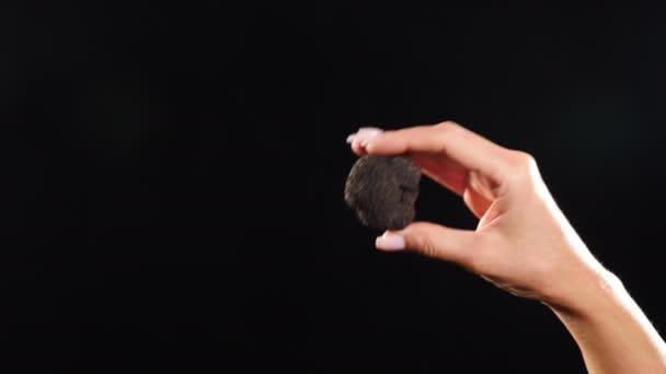 Elegante weibliche Hände halten Knollen schwarzer Trüffel. Seltener schwarzer Trüffelpilz auf dunklem Hintergrund. Nahaufnahme. Luxuriös teures Essen, Gourmet im Restaurant. 4 k Video