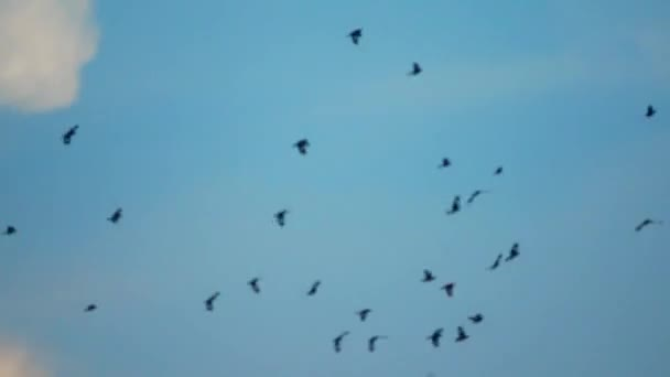 hejno ptáka letí zpátky na oblohu.