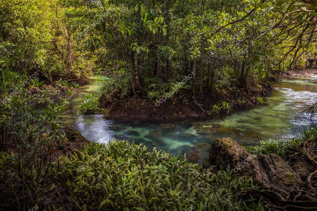 The clear green stream flows through the mangrove forest root. In the midst of the shady and beautiful nature. Close up. Tha Pom Klong Song Nam beautiful and famous tourist destination in Krabi, Thailand.