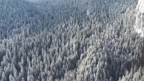 Zmrzlé stromy a sněhem pokryta jehličnatý les.