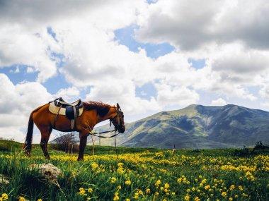 """Картина, постер, плакат, фотообои """"Одинокая лошадь на красивые цветочные холме, Армения"""", артикул 201348498"""