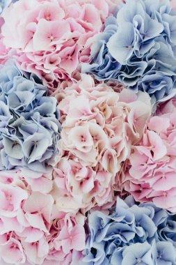 """Картина, постер, плакат, фотообои """"Красивый весенний букет с цветами нежные розовые и голубые Гортензия"""", артикул 223471936"""