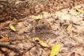 Photo Close up of ants nest