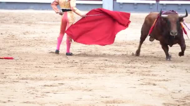 Man Bullfighter Dressed Bullfighting Costume u2014 Stock Video & Man Bullfighter Dressed Bullfighting Costume u2014 Stock Video ...