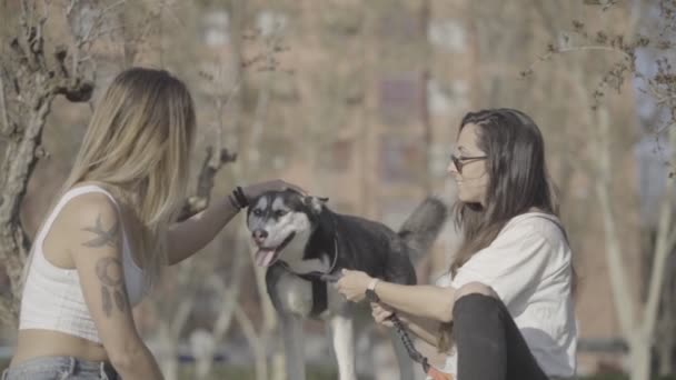 Two women have fun with a Siberian Husky dog.