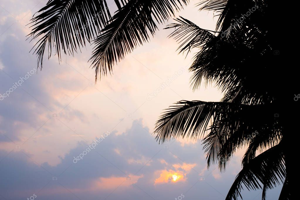 Silhouette Landscape nature coconut trees with beautiful blue sky at sunset