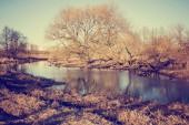 malebný pohled na krásné podzimní zlatý les a jezero