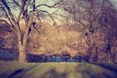 festői kilátással a gyönyörű őszi golden erdő és tó
