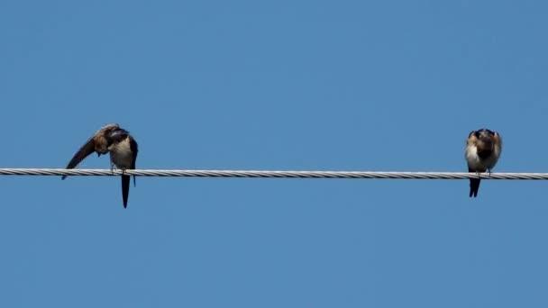 Két fecskék-felett magas erő kábel nyújtás