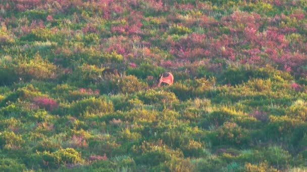 Deers feeding in the wild